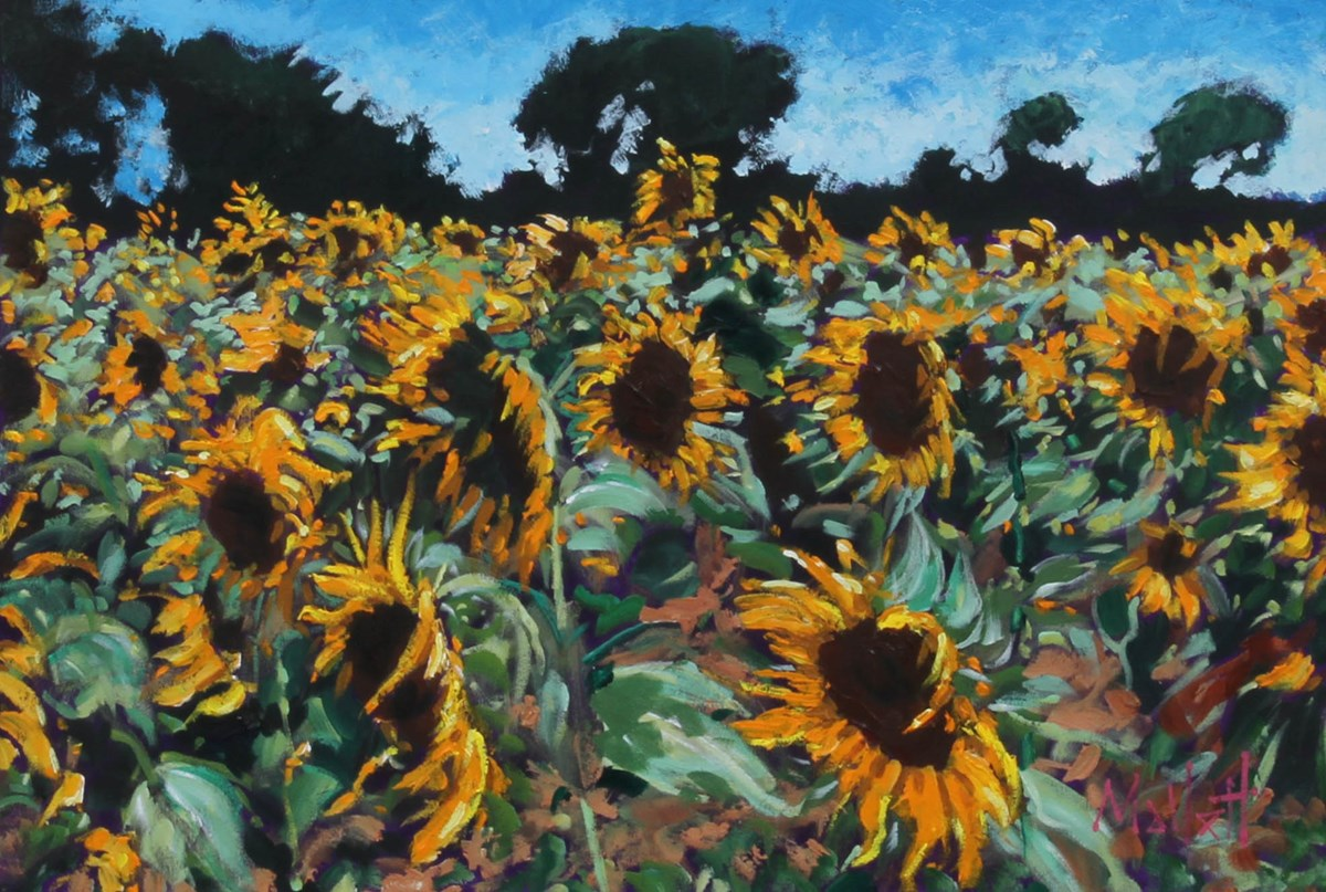Sunflower Profusion by timmy mallett - Original on Stretch Canvas sized 30x20 inches. Available from Whitewall Galleries